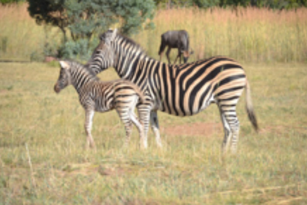 safari-plains-march-news-2019-8