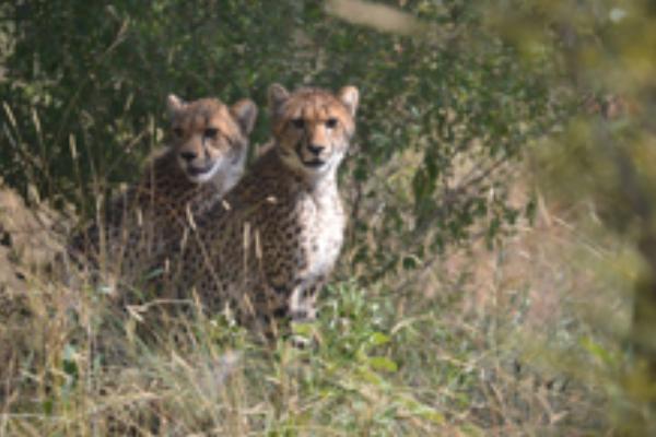 safari-plains-april-news-2019-2