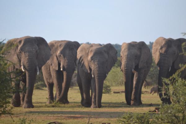 safari-plains-april-news-2019-5