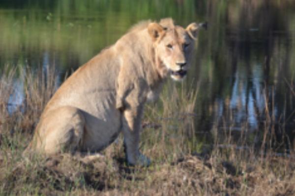 safari-plains-may-news-2019-4