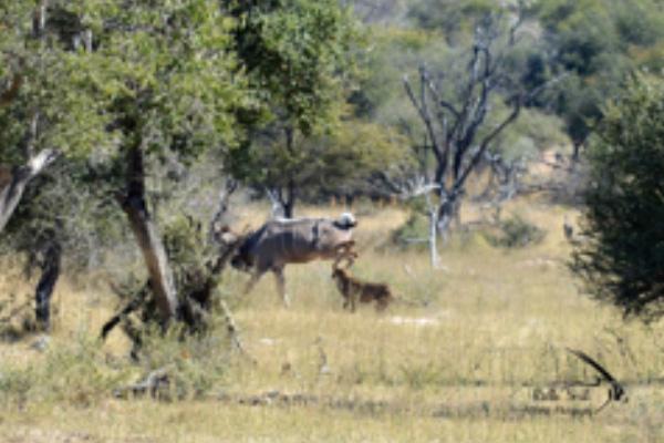 safari-plains-july-news-2019-2