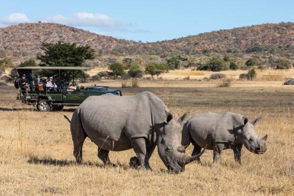safari-plains-6