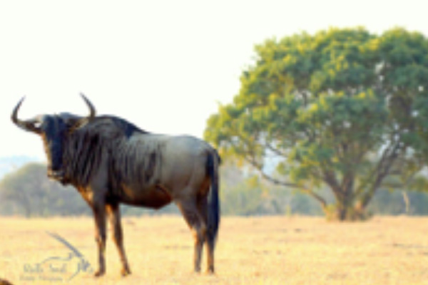 safari-plains-august-news-2019-3