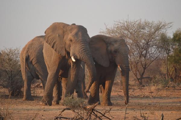 2019-safari-plains-october-newsletter-2