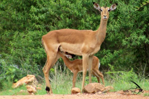 2019-safari-plains-december-newsletter-2