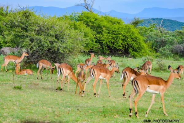 2019-safari-plains-december-newsletter-3