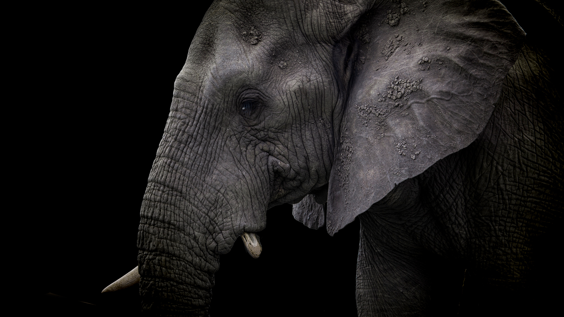 World Elephant Day: Conservation of Elephants through Private Game Reserves.
