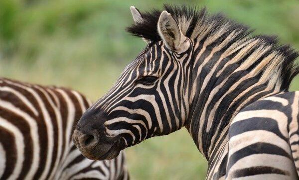 SafariPlains-News-Feb-02