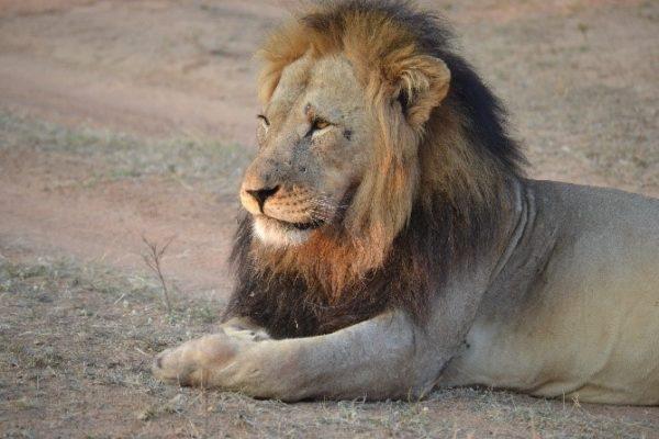 SafariPlains-News-Feb-04