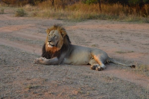 SafariPlains-News-Feb-05