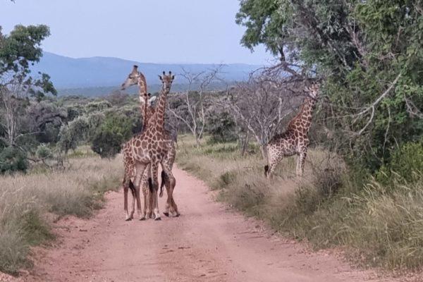 SafariPlains-News-Feb-13