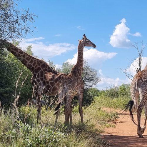 SafariPlains-News-Feb-14