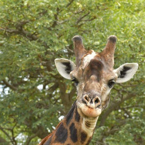 SafariPlains-News-Feb-15
