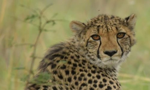 SafariPlains-News-Jan-13