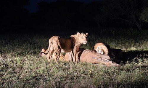 SafariPlains-News-Jan-21