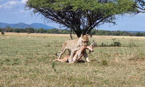 SafariPlains-blog-march-01