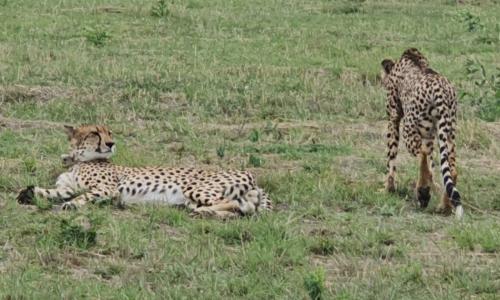 SafariPlains-blog-march-05