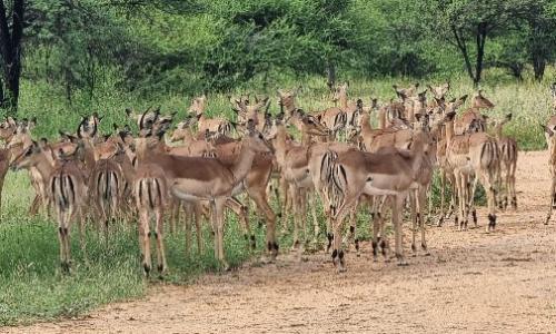 SafariPlains-blog-march-09