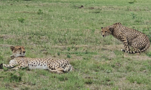 SafariPlains-blog-march-22