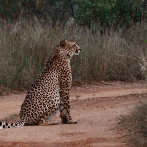 SafariPlains-Fransje-blog-6-17