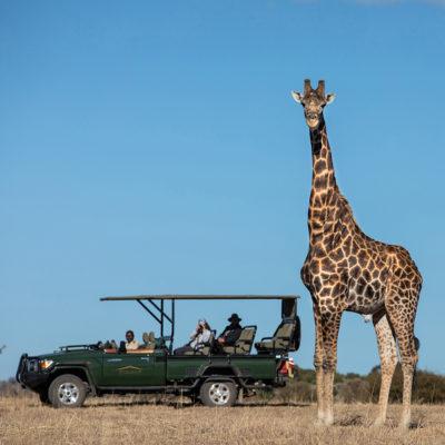 Safari-Plains-Wildlife-Giraffe