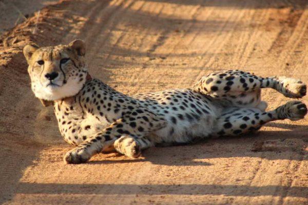 SafariPlains-News-July-020