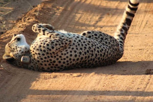 SafariPlains-News-July-021