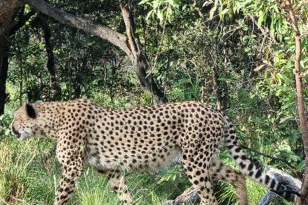 SafariPlains-News-July-032