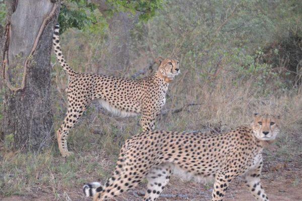 SafariPlains-News-July-035