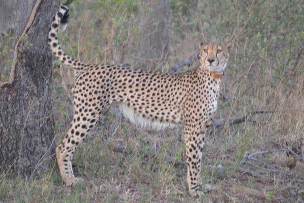 SafariPlains-News-July-036