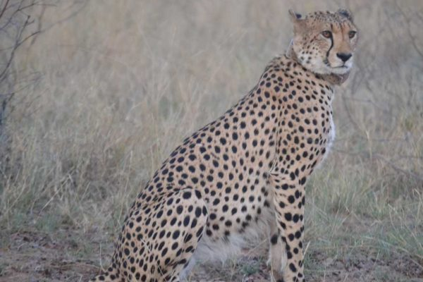 SafariPlains-News-July-037