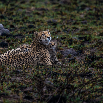 mulwati-conssesion-womans-day-cheetah